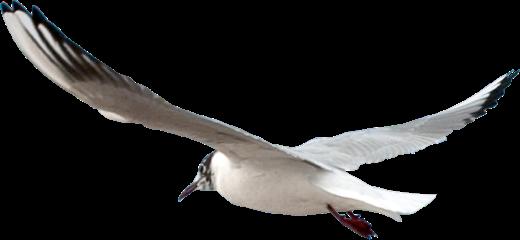 Hi Bird 1@2x